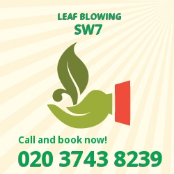South Kensington leaf clearing equipment