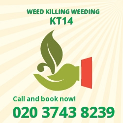 West Byfleet weed removal service KT14