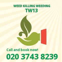 Hanworth weed removal service TW13