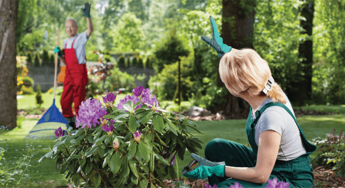 Expert Gardening Treatment in South East London