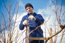 Preparing Your Garden In Wimbledon For Christmas