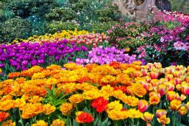 How To Care For Your Garden Flowers in Hampstead