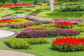 Four Cool Ways to Have More Flowers in Your Garden in Enfield