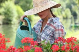 Helpful Pointers On Growing Flowers In Your Garden in Greenwich