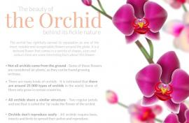 The Beauty Of The Orchid Behind Its Fickle Nature