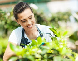 lawn and garden maintenance Orpington
