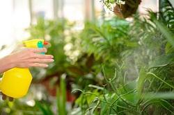 Haggerston removal of garden waste E2