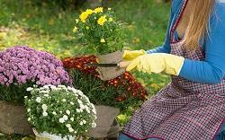 Dalston garden maintenance E8