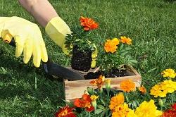 lawn and garden maintenance Islington