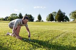 control weeds in Brent Park