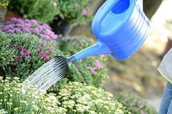 Kidbrooke removal of garden waste SE9