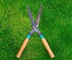 SW19 garden clearance Wimbledon