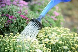 Soho garden maintenance W1