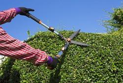 landscape lawn mowers Alexandra Park