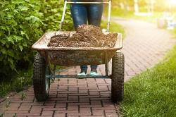 Belsize Park seasonal gardening tips