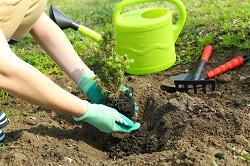 SE22 lawn and garden care in East Dulwich