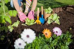 Finchley seasonal gardening tips