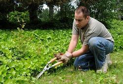 Finchley bush and shrub planting