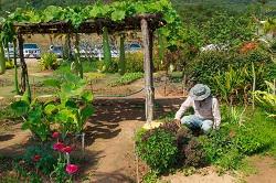 Gospel Oak garden tidy ups NW5