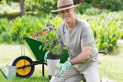 Harrow bush and shrub planting