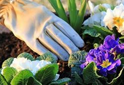 HA2 planting flowers Harrow