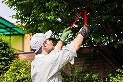 Holland Park regular gardener W14