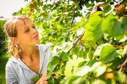 Kensal Green bush and shrub planting