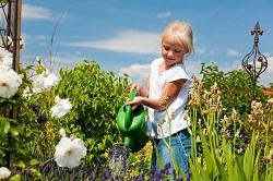Kingston upon Thames seasonal gardening tips