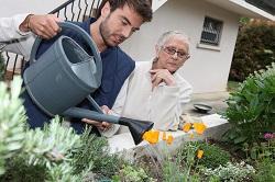 Mayfair bush and shrub planting
