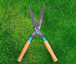 Paddington green grass care W2