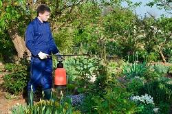 growing garden plants Pinner