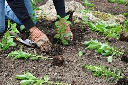 Pinner bush and shrub planting