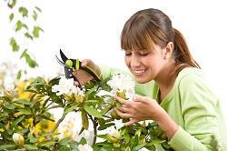 Plumstead regular gardener SE18