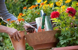 St John's Wood lawn and garden maintenance