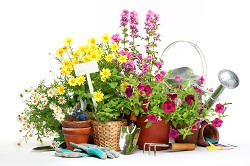 Tulse Hill regular gardener SE24