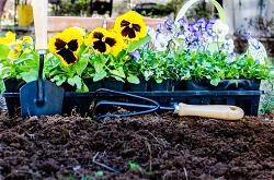 RM13 seeding a lawn Wennington