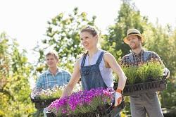 West Ealing seasonal gardening tips