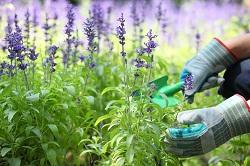 landscape lawn mowers Wimbledon Park