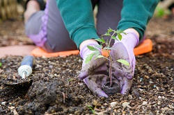 Winchmore Hill seasonal gardening tips