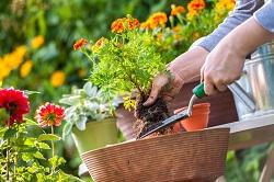 UB4 garden and grass care